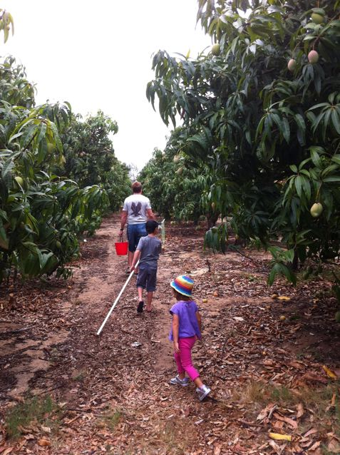 The Mango Farm Visit